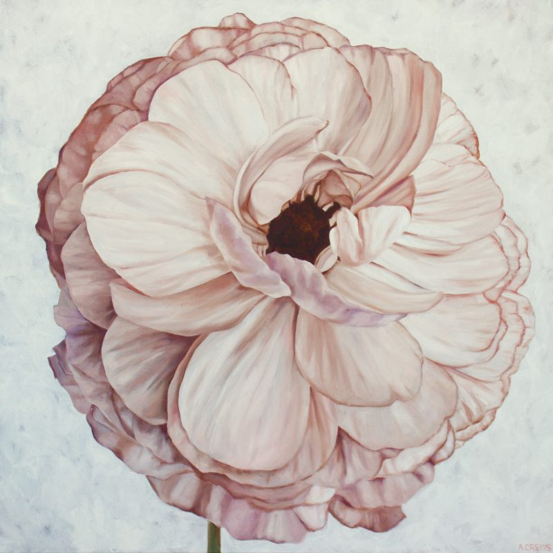 """""""Pink Petticoat"""" by Amy Crews"""