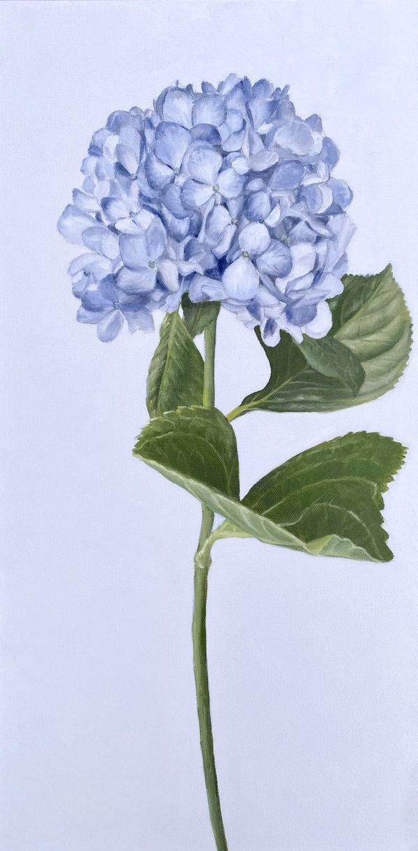 Blue Hydrangea by Amy Crews